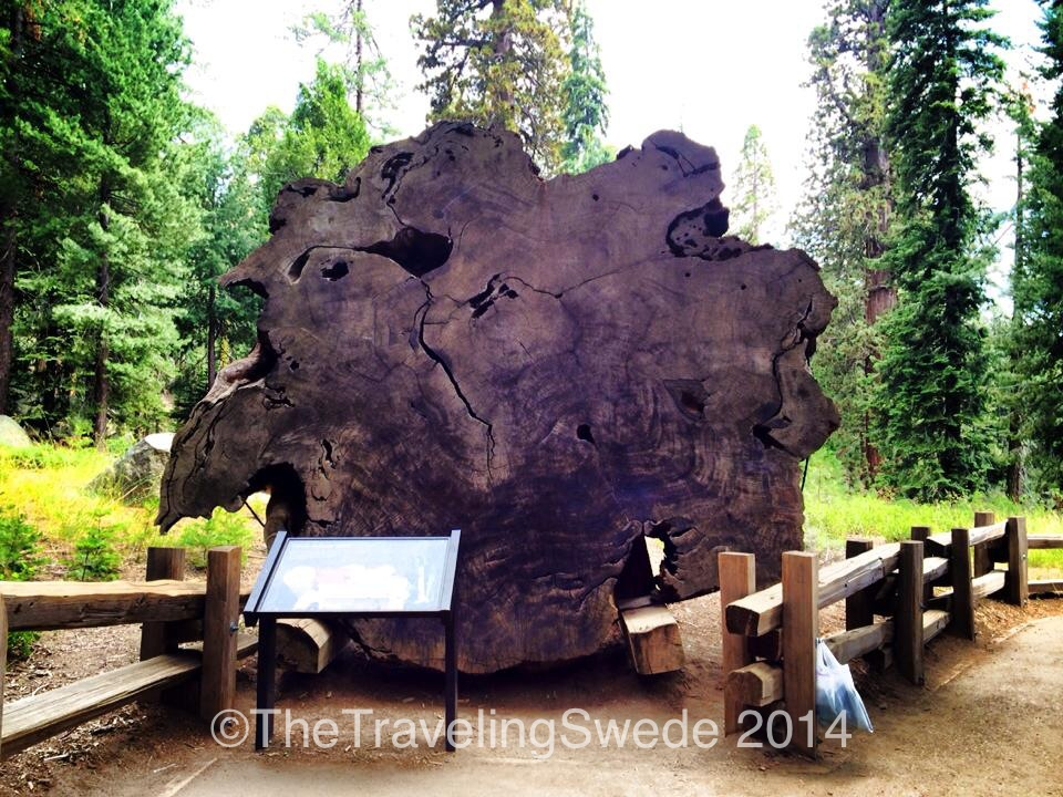 A fallen sequoia tree. I wish I would remember how old this tree was but definitely thousands of years.