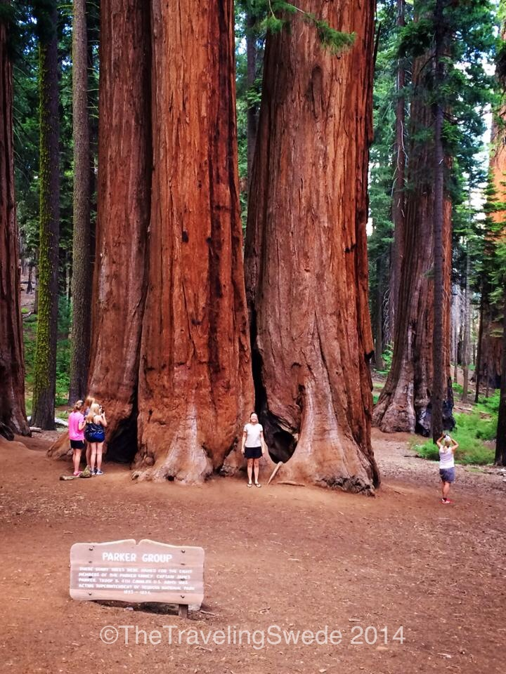 But sometimes you luck out and there's someone around to take a photo. That's me standing in front of a grove of giant sequoias.